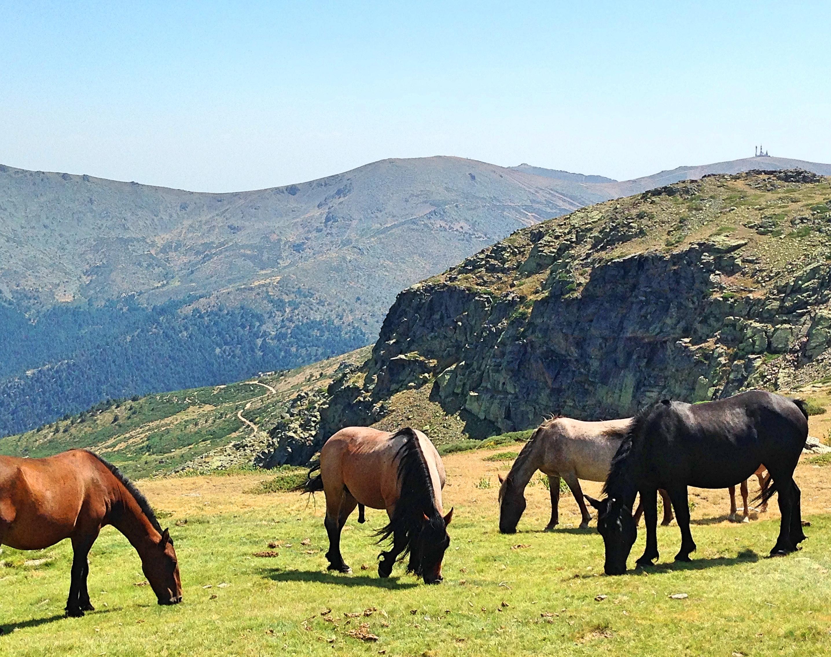 penalara_horses