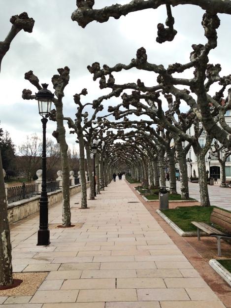 Burgos trees