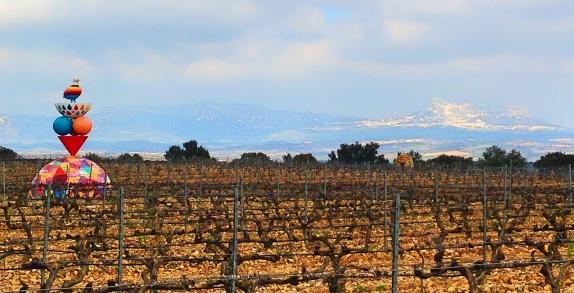 Logroño Vineyard