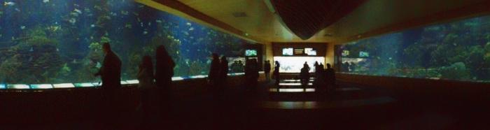 Valencia_Aquarium2