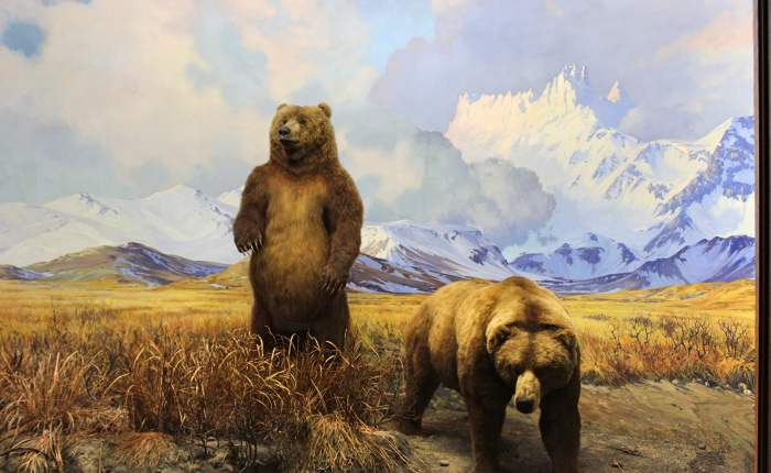 NY Museums: The American Museum of NaturalHistory